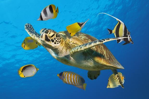 """Удивительные по красоте монеты серии """"Австралийская морская жизнь - рифы"""""""