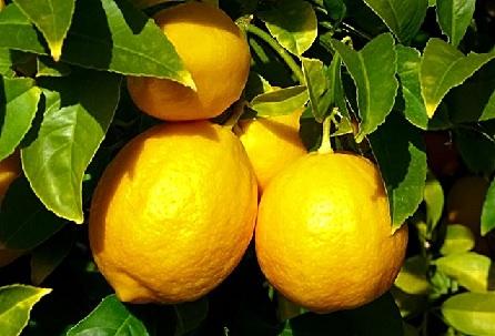 Чистка бронзовых монет с помощью лимонной кислоты